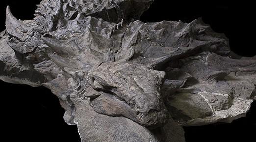 Phát hiện hóa thạch khủng long nguyên vẹn sau gần 110 triệu năm 1