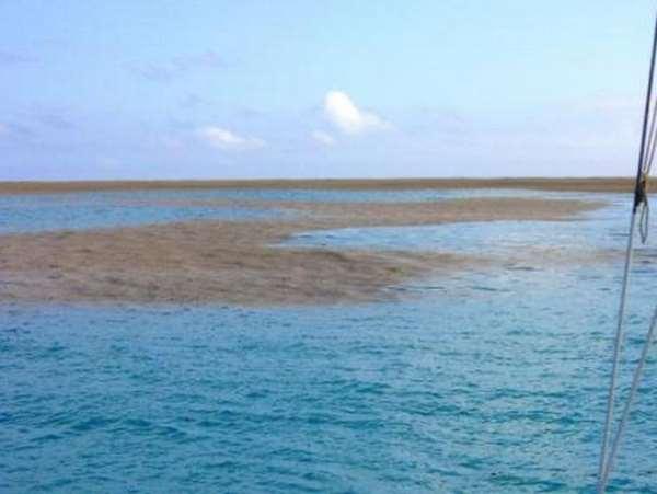 Phát hiện 'bãi cát' giữa biển, tới gần xem mọi người liền hoảng hốt tháo chạy 2