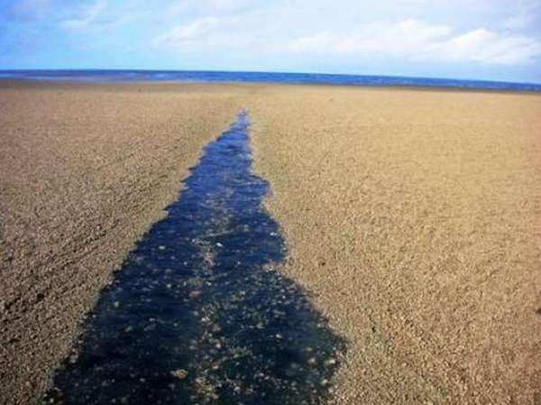 Phát hiện 'bãi cát' giữa biển, tới gần xem mọi người liền hoảng hốt tháo chạy 4