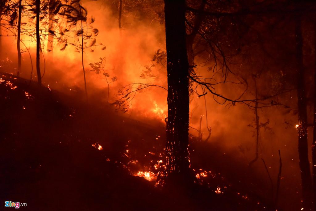 2000 người trắng đêm dập lửa cứu rừng phòng hộ ở Sóc Sơn 3