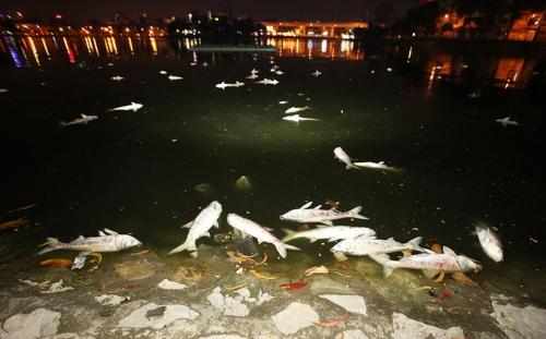 Nguyên nhân cá chết hàng loạt trên hồ Hoàng Cầu sau đúng 1 năm 1