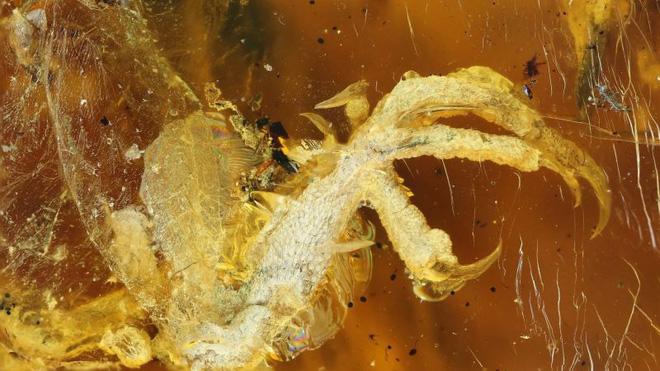 Phát hiện kinh ngạc về xác con chim 100 triệu năm tuổi 1