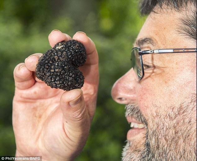 Người đàn ông đào vườn vô tình phát hiện loại nấm quý hiểm, vô cùng đắt đỏ 2