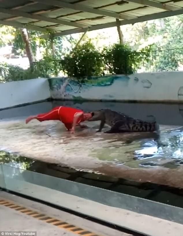 Rùng rợn cảnh cá sấu ngoạm đầu, quăng quật diễn viên xiếc 1