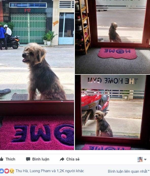 Chó bỗng dưng quay về tìm chủ cũ sau 3 năm bị bắt đi 1