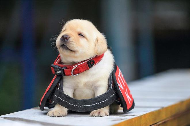 Hình ảnh 5 chú chó nhỏ siêu dễ thương tham gia lực lượng cảnh sát đốn tim cộng đồng mạng số 2