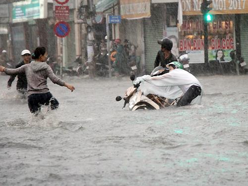 Xà cừ bật gốc trong mưa lớn, gây mất điện nhiều khu vực quận 7 2
