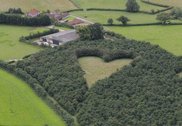 Hình ảnh Tưởng niệm vợ quá cố, ông lão trồng cả khu rừng và bí mật được phát hiện sau 17 năm số 2