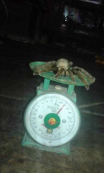 Bắt được nhện