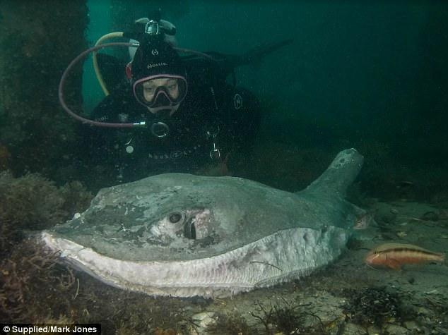 Thợ lặn phát hiện sự thật thương tâm dưới đáy biển khiến nhiều người phẫn nộ  8
