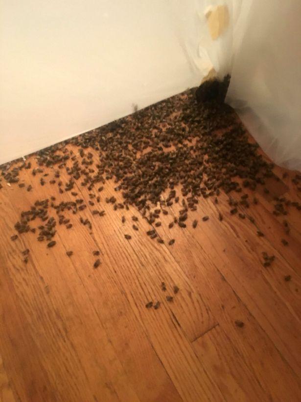 Dòng chất lỏng kì lạ chảy trên tường nhà, người phụ nữ sửng sốt nhận ra... 4