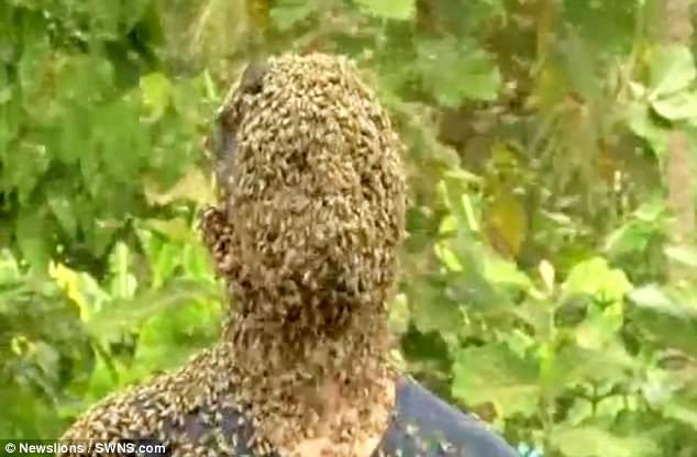 Kinh dị người đàn ông để 60.000 con ong bu kín mặt vẫn bình thản đọc sách 4