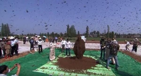 Kinh dị người đàn ông để 60.000 con ong bu kín mặt vẫn bình thản đọc sách 5