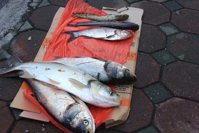 Hình ảnh Tan bão, người dân Thủ đô vác ngư cụ ra sông Tô Lịch bắt cá số 3