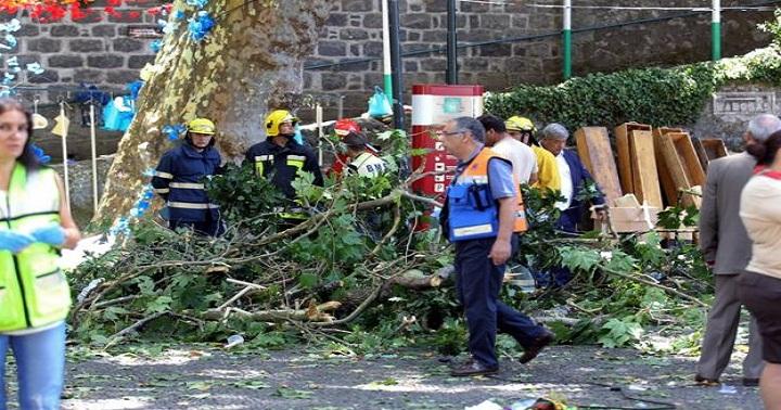 Cây 200 tuổi đổ xuống khiến 13 người chết, 49 người bị thương  1