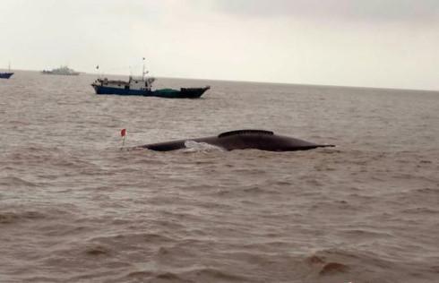 Tàu cá Trung Quốc đâm nhau, 9 người thiệt mạng 1