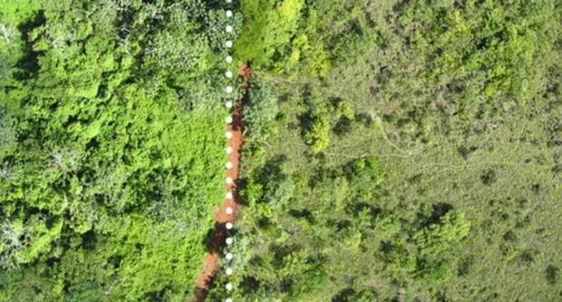 Hiện tượng bất ngờ sau khi đổ 12.000 tấn vỏ cam xuống khu bảo tồn thiên nhiên 3