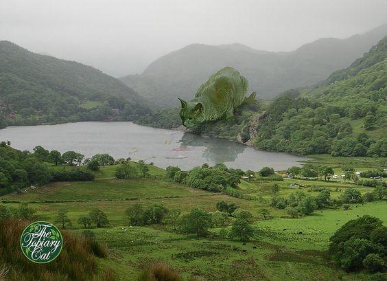 Hình ảnh Bức ảnh mèo uống nước hồ thu hút hơn 3 triệu lượt xem số 3