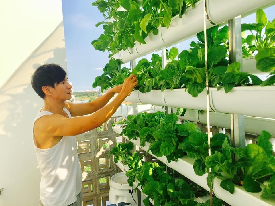 Hình ảnh Cận cảnh vườn rau sạch xanh mướt trong những biệt thự triệu đô của sao Việt. số 1