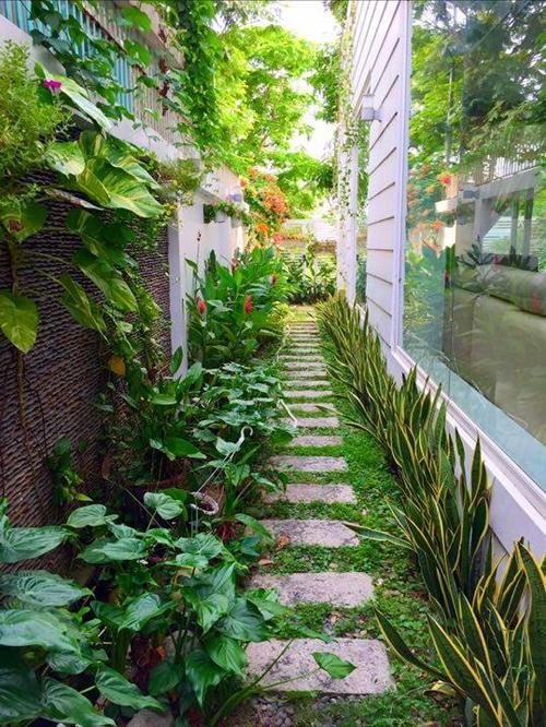 Hình ảnh Cận cảnh vườn rau sạch xanh mướt trong những biệt thự triệu đô của sao Việt. số 11