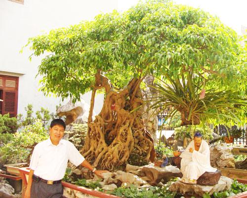 """Hình ảnh Những """"siêu cây"""" cảnh hiếm giá triệu đô gây xôn xao dư luận của đại gia Việt số 2"""