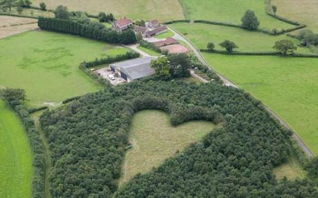Người đàn ông trồng 6.000 cây xanh khi vợ mất, 17 năm sau bí mật ngọt ngào được hé lộ 4
