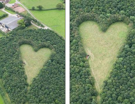 Người đàn ông trồng 6.000 cây xanh khi vợ mất, 17 năm sau bí mật ngọt ngào được hé lộ 5