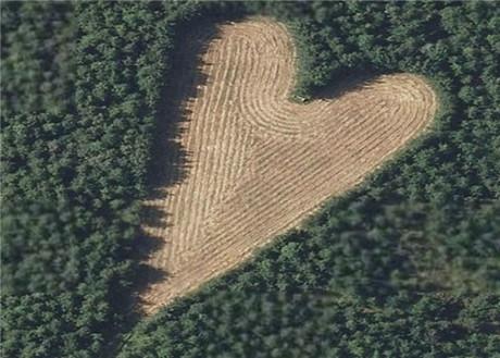 Người đàn ông trồng 6.000 cây xanh khi vợ mất, 17 năm sau bí mật ngọt ngào được hé lộ 6