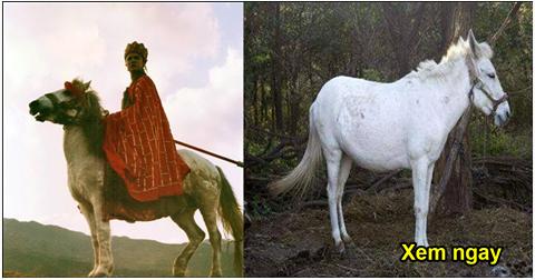 Giải trí - Hậu Tây Du Ký, Bạch Long Mã nhận cái kết bi thương