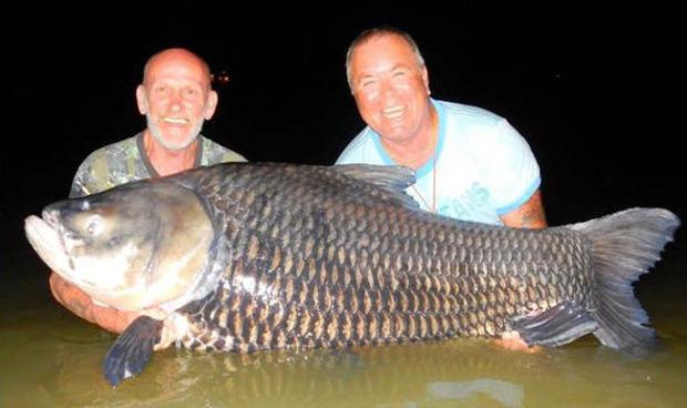 Hình ảnh Dùng tro cốt của bạn thân để làm mồi câu cá chép khổng lồ số 4