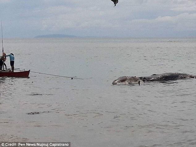 Xác thủy quái dạt vào bờ biển Philippines, dân kéo trả lại biển 3
