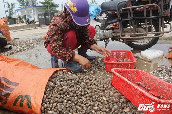 Ngư dân Hà Tĩnh trúng đậm 'lộc biển' sau mưa lũ 3