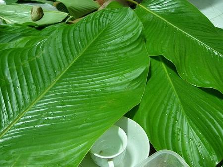 Hình ảnh Bí quyết luộc bánh chưng xanh tự nhiên thắp hương không chỉ ngày Tết số 3