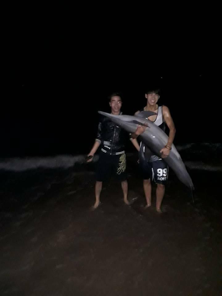 Cá heo 30kg bị xẻ thịt sau khi trôi dạt vào bãi biển Đồ Sơn 2