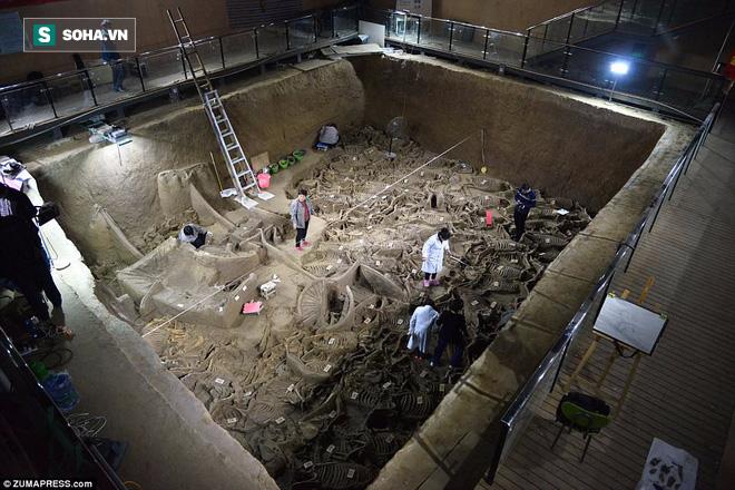 Bí ẩn cổ mộ 2.400 năm chứa hơn 100 xác ngựa ở Trung Quốc 1