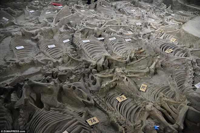 Bí ẩn cổ mộ 2.400 năm chứa hơn 100 xác ngựa ở Trung Quốc 5