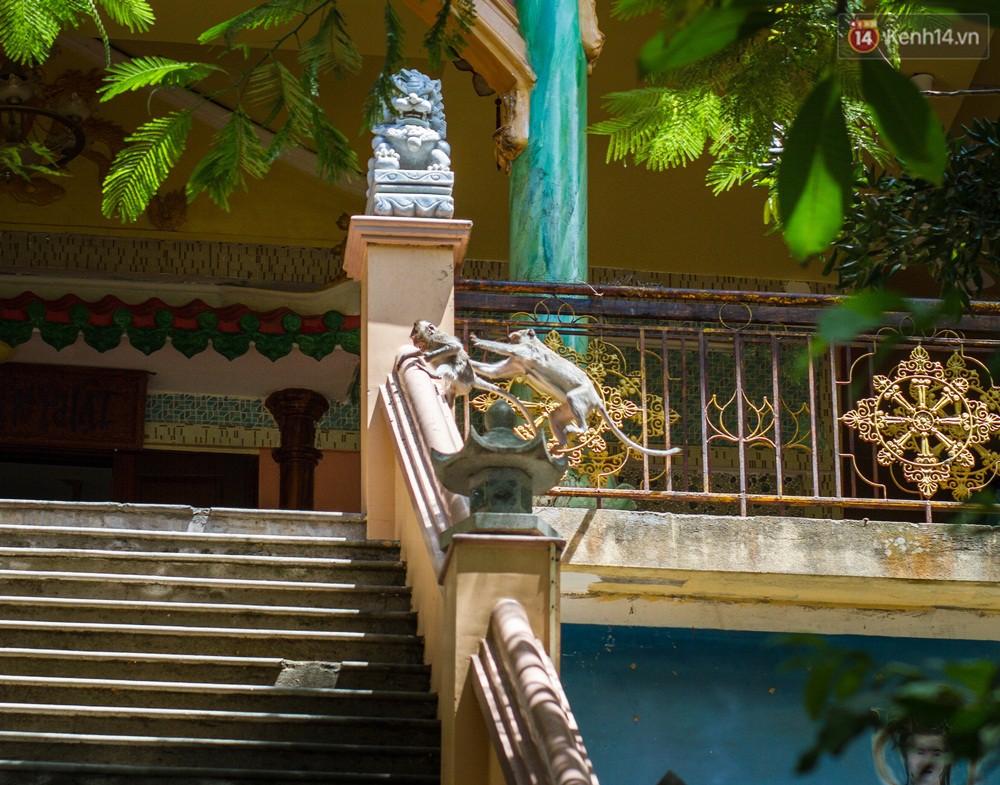 Chùm ảnh: Chuyện về đàn khỉ đuôi dài nương náu trong ngôi chùa ở Vũng Tàu, sống nhờ thức ăn của du khách 5