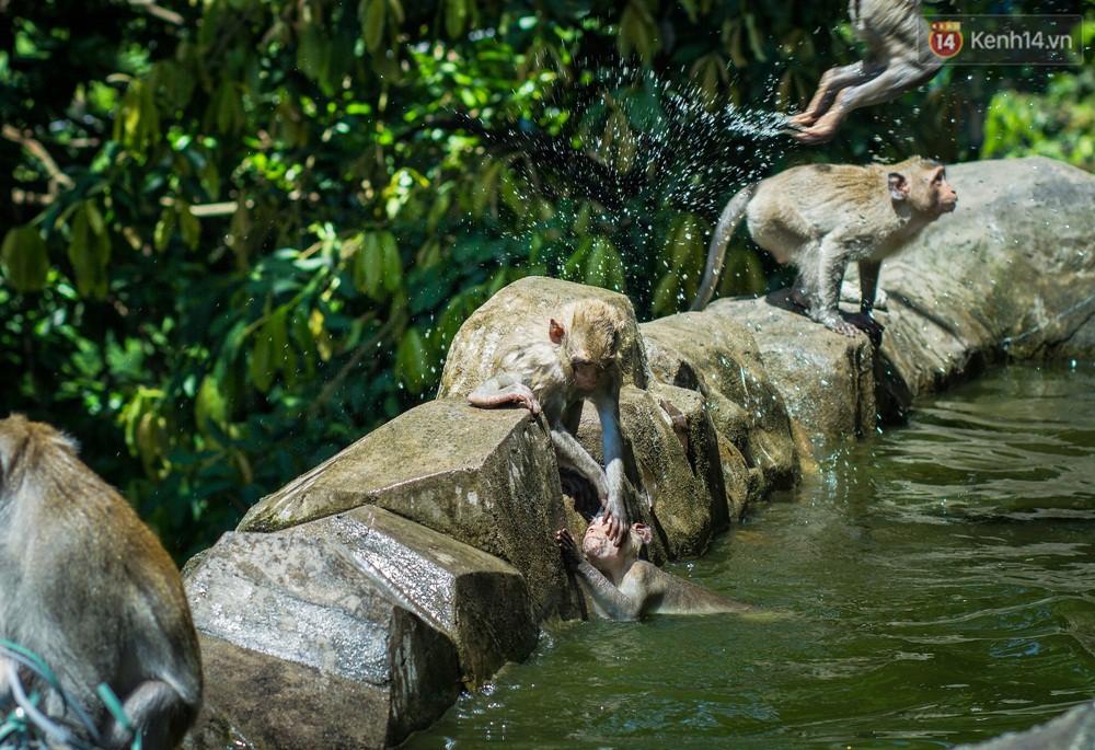 Chùm ảnh: Chuyện về đàn khỉ đuôi dài nương náu trong ngôi chùa ở Vũng Tàu, sống nhờ thức ăn của du khách 6