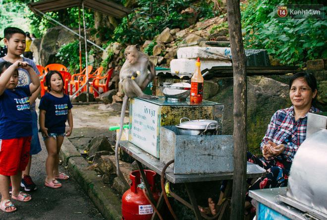 Chùm ảnh: Chuyện về đàn khỉ đuôi dài nương náu trong ngôi chùa ở Vũng Tàu, sống nhờ thức ăn của du khách 9