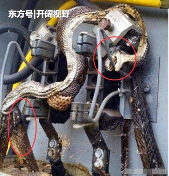 Cả khu vực bị mất điện diện rộng, người thợ điện kiểm tra thì phát hiện sự thật kinh hoàng 2