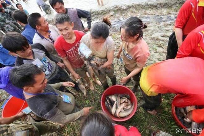 600 người quần thảo dưới đầm lầy, săn bắt, giành giật hơn 3000 con cá 7