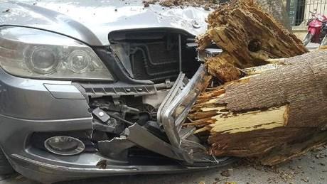Hà Nội: Cây xanh bất ngờ đổ đè bẹp xe ô tô, nhiều người may mắn thoát chết 1