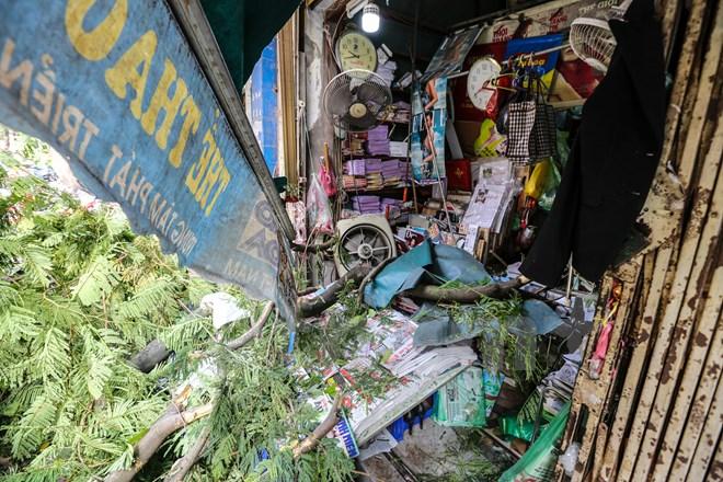 Hà Nội: Cây xanh bất ngờ đổ đè bẹp xe ô tô, nhiều người may mắn thoát chết 3