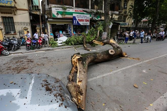 Hà Nội: Cây xanh bất ngờ đổ đè bẹp xe ô tô, nhiều người may mắn thoát chết 2