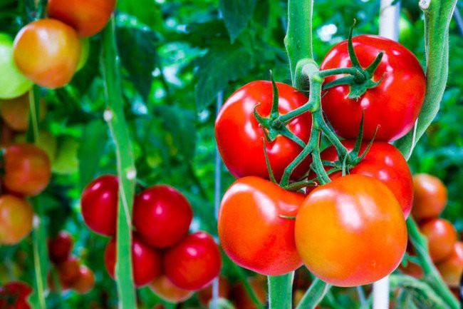 Hóa ra những trái cây chúng ta ăn thường ngày lại ẩn chứa nhiều điều thú vị 3