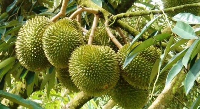 Hóa ra những trái cây chúng ta ăn thường ngày lại ẩn chứa nhiều điều thú vị 6