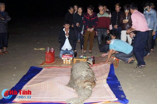 Ngư dân chôn cất xác cá thần dạt vào bờ biển ở Hà Tĩnh 1