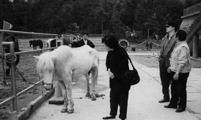 Cái kết thê thảm của chú ngựa Bạch Long Mã phim Tây Du Ký bản 1986 (P2) 6