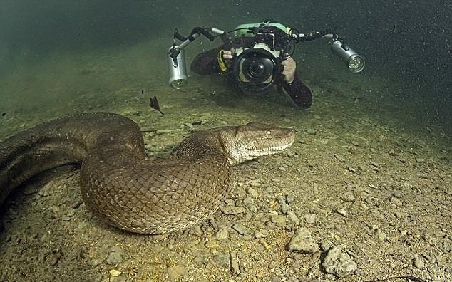 Nói đến trăn Anaconda ai cũng sợ nhưng ẩn sau bức hình này là sự thật mà ai nghe cũng dựng tóc gáy 2