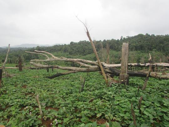 Đắk Nông: Hàng trăm cán bộ được cấp đất rừng trái quy định? 1
